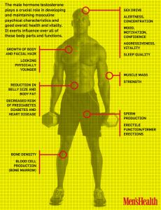 testosterone-chart1